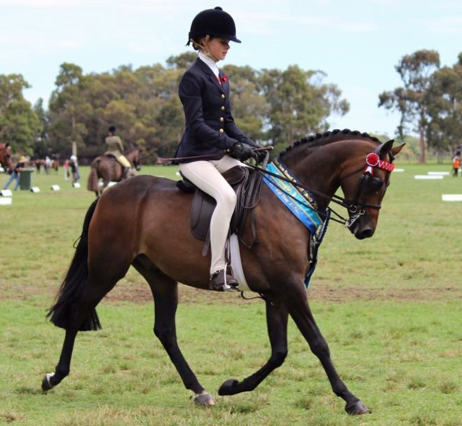 Winning SHCV Large pony 2017